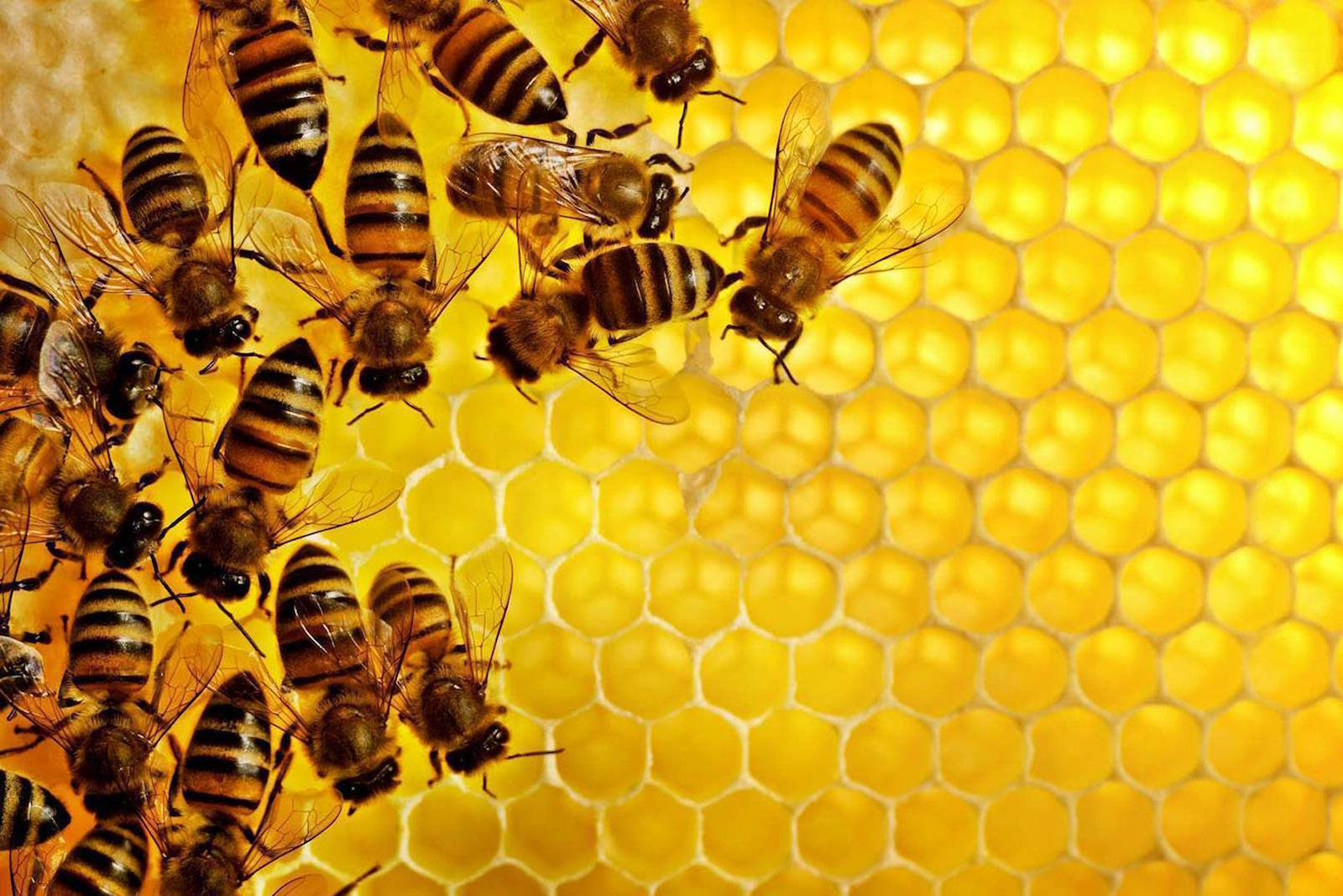 Wholesale Honey